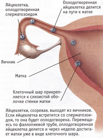 foto-molodaya-sperma